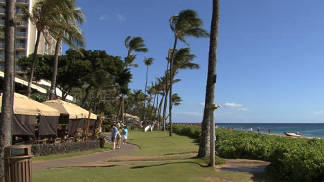 Maui-Palm-trees-at-resort-with-tourists