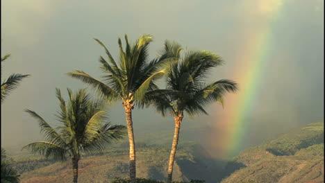 Maui-Rainbow-and-palms-in-sun