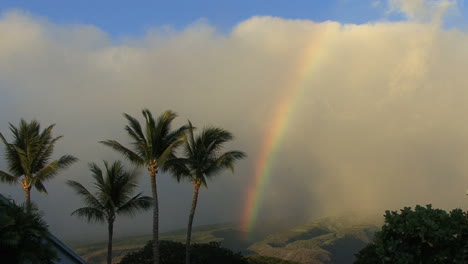 Maui-Rainbow-with-waving-palms-2