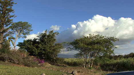 Maui-Trees-sugar-cane-and-clouds