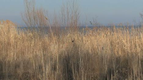 Tree-shadow-at-Green-Bay-WI