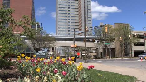 Tulipanes-En-El-Centro-De-La-Ciudad-De-Fort-Wayne-Indiana