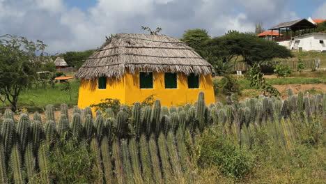 Bonaire-cactus-fence