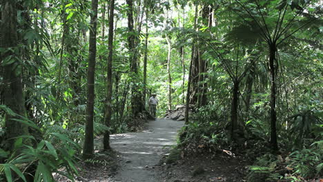 Dominica-rainforest-with-man-on-trail