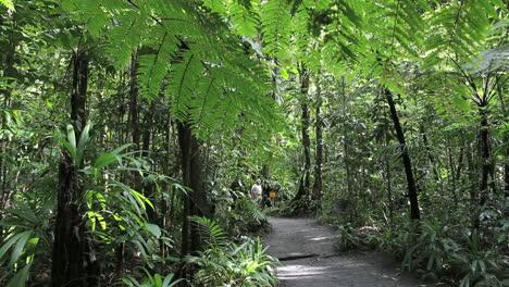Dominica-rainforest-path