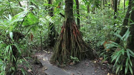 Rainforest-tree