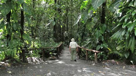 Puente-Dominica-En-Una-Selva-Tropical