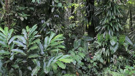 Selva-Dominicana-Con-Muchas-Hojas