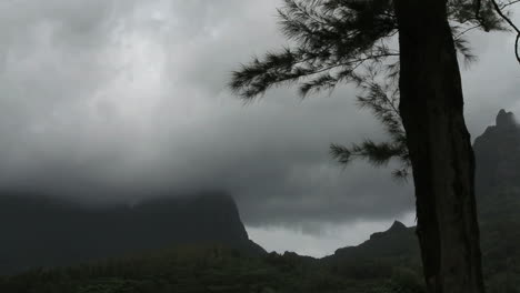Moorea-moving-clouds-and-tree