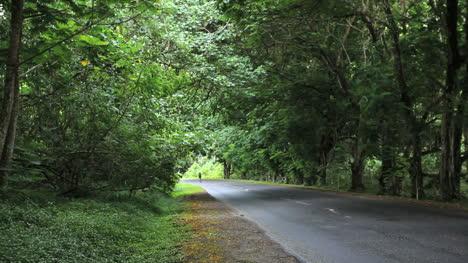 Bicicleta-Moorea-En-La-Carretera-De-La-Selva