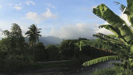 Tahiti-river-valley-with-banana-leaves