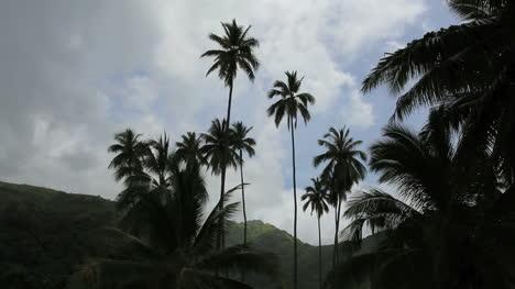 Kokospalmen-Und-Vögel