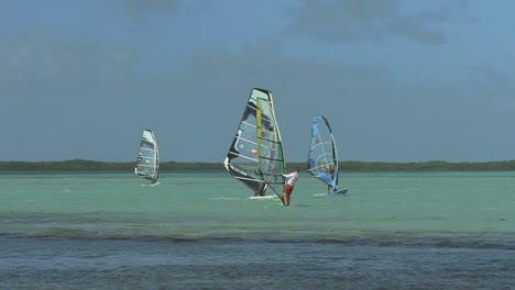 Bonaire-wind-surfers
