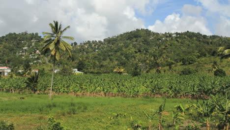 St-Lucia-banana-plantation-view