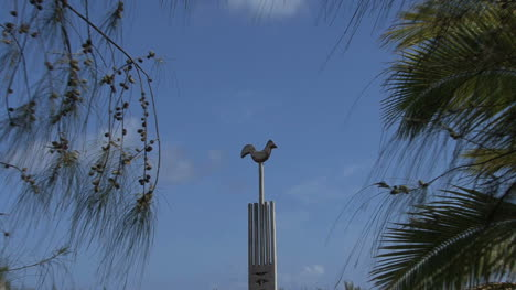 Huahine-zooms-from-wooden-bird