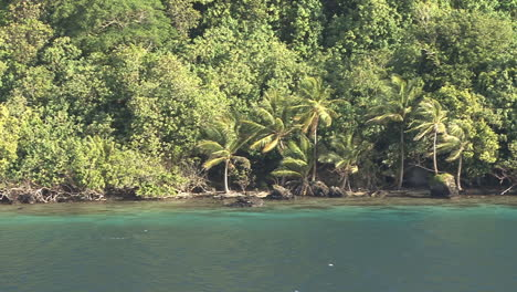 Huahine-view-of-palms-on-shore