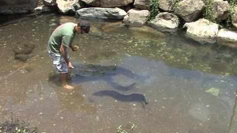 Huahine-man-feeding-eels