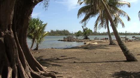 Huahine-tree-and-sacred-site