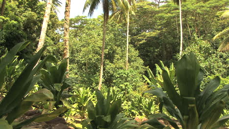 Huahine-jungle-view