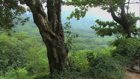 Vista-De-Moorea-Del-Bosque-A-Través-De-árboles