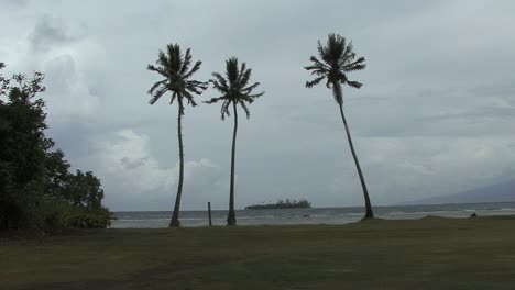 Moorea-palms-and-cloudy-sky