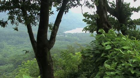 Moorea-Opunohu-Bay-Visto-A-Través-De-árboles