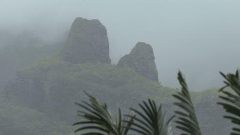 Moorea-misty-mountain-with-bird
