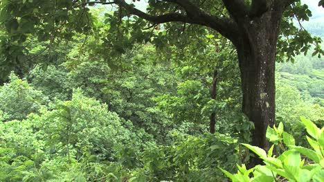 Moorea-green-jungle