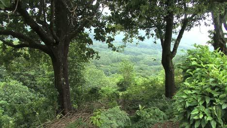Moorea-forest-in-valley-below