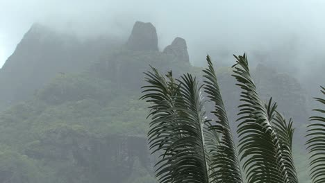 Moorea-ferns-and-misty-mountain