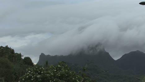 Pájaro-Moorea-Vuela-Más-Allá-De-Una-Montaña-Nublada