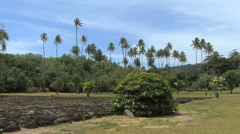 Raiatea-plams-and-Taputapuatea-marae