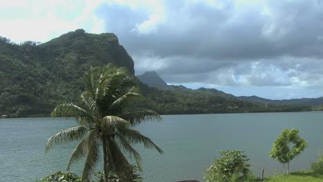 Raiatea-longest-river-with-palm-tree