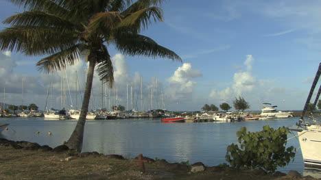 Raiatea-boat-harbor-with-palms