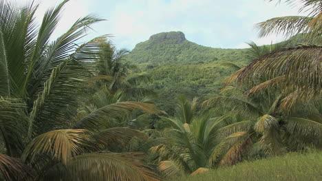 Raiatea-interior-with-palm-trees
