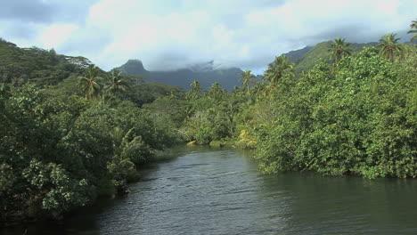 Raiatea-vegetation-by-river