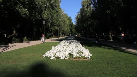 Madrid-flowers-in-park