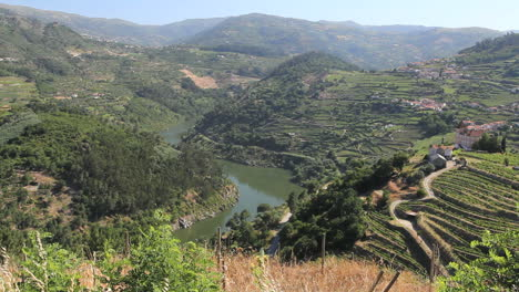 Vineyards-terraced-on-slopes-above-the-Douro