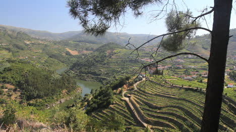 Vineyards-and-Douro-vista