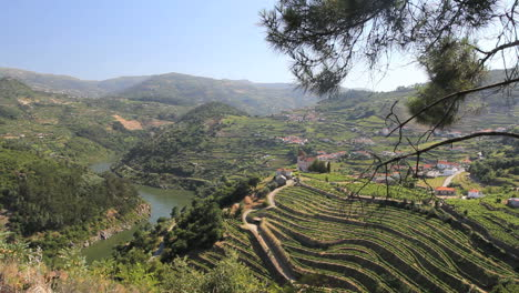 Vineyards-above-the-Douro