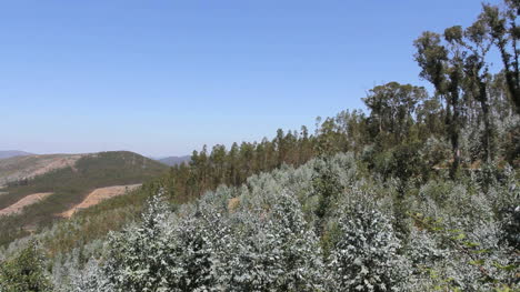 Portuguese-hills-with-eucalyptus-and-pines