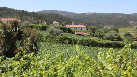 Viñedo-Portugués-En-Las-Colinas