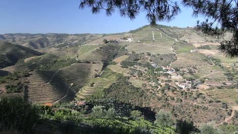 Portuguese-vineyards-in-dramatic-hill-country