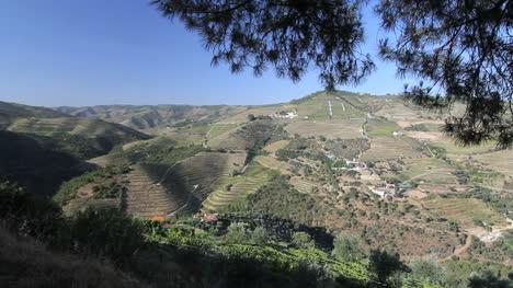 Port-vineyards-on-a-Portuguese-hillside