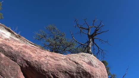 Colorado-Baum-Und-Roter-Felsen