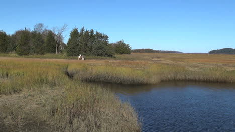 Massachusetts-Essex-marsh-tidal-stream-with-artist-sx