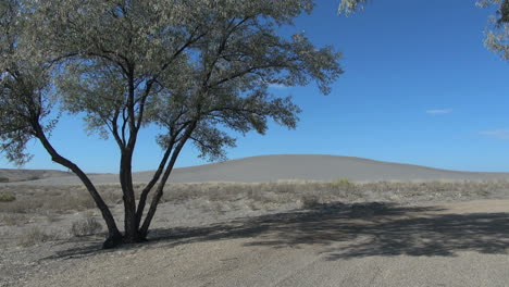 Idaho-Bruneau-Sand-Dunes-and-tree-sx
