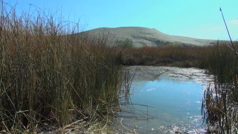 Idaho-Bruneau-Sand-Dunes-with-reeds