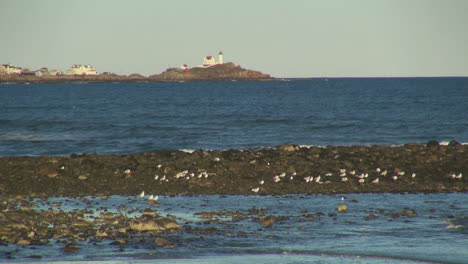 Maine-York-Beach-with-spit-and-gulls-sx