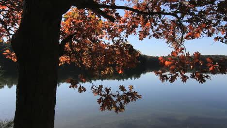 Massachusetts-Walden-Pond-&-oak-leaves-c